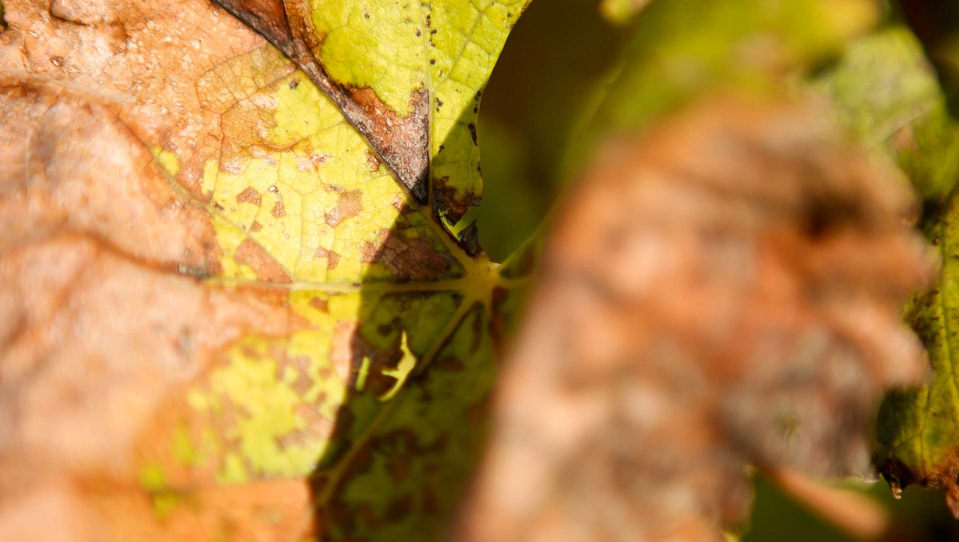 autunno olivella