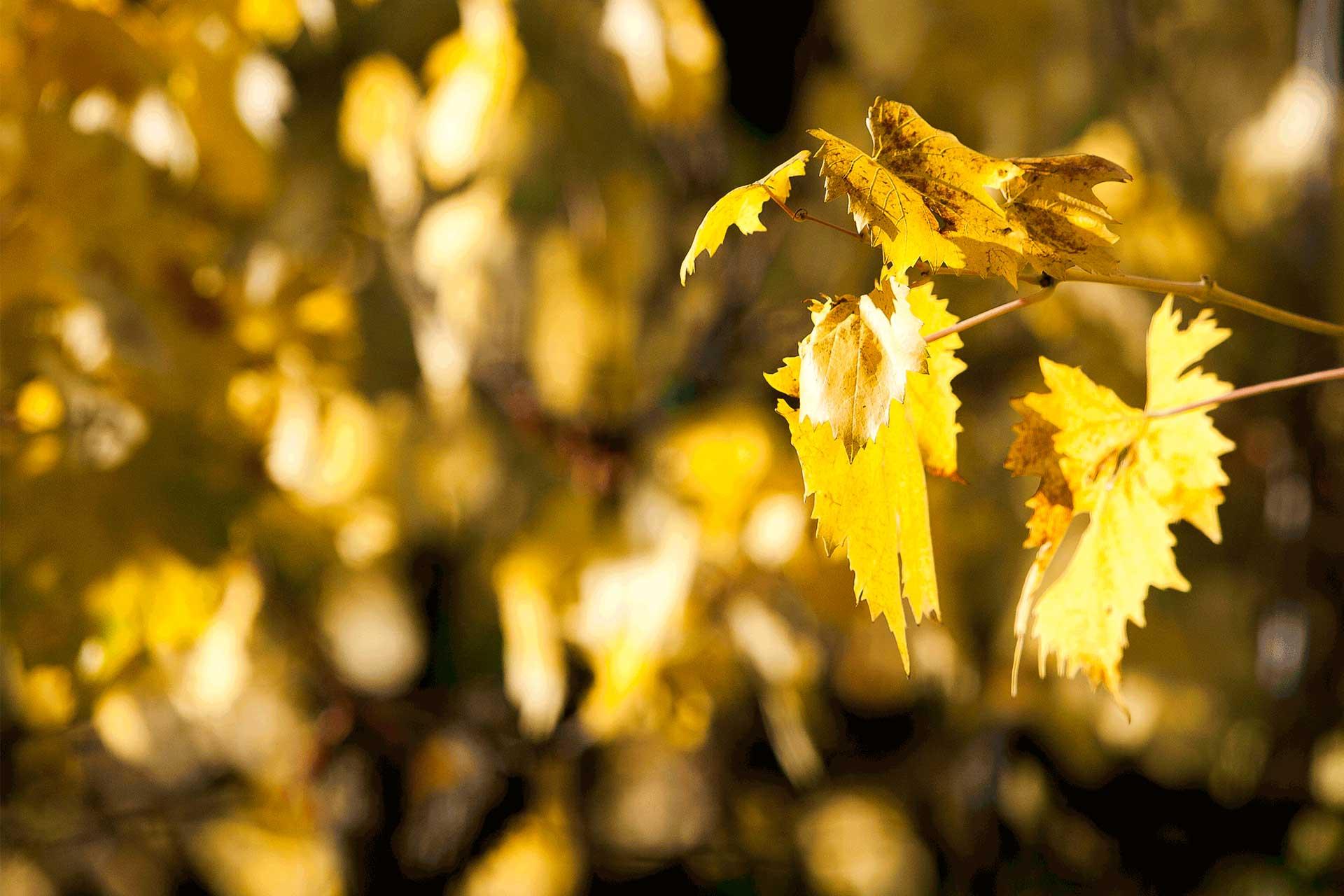 autunno-dorato>
