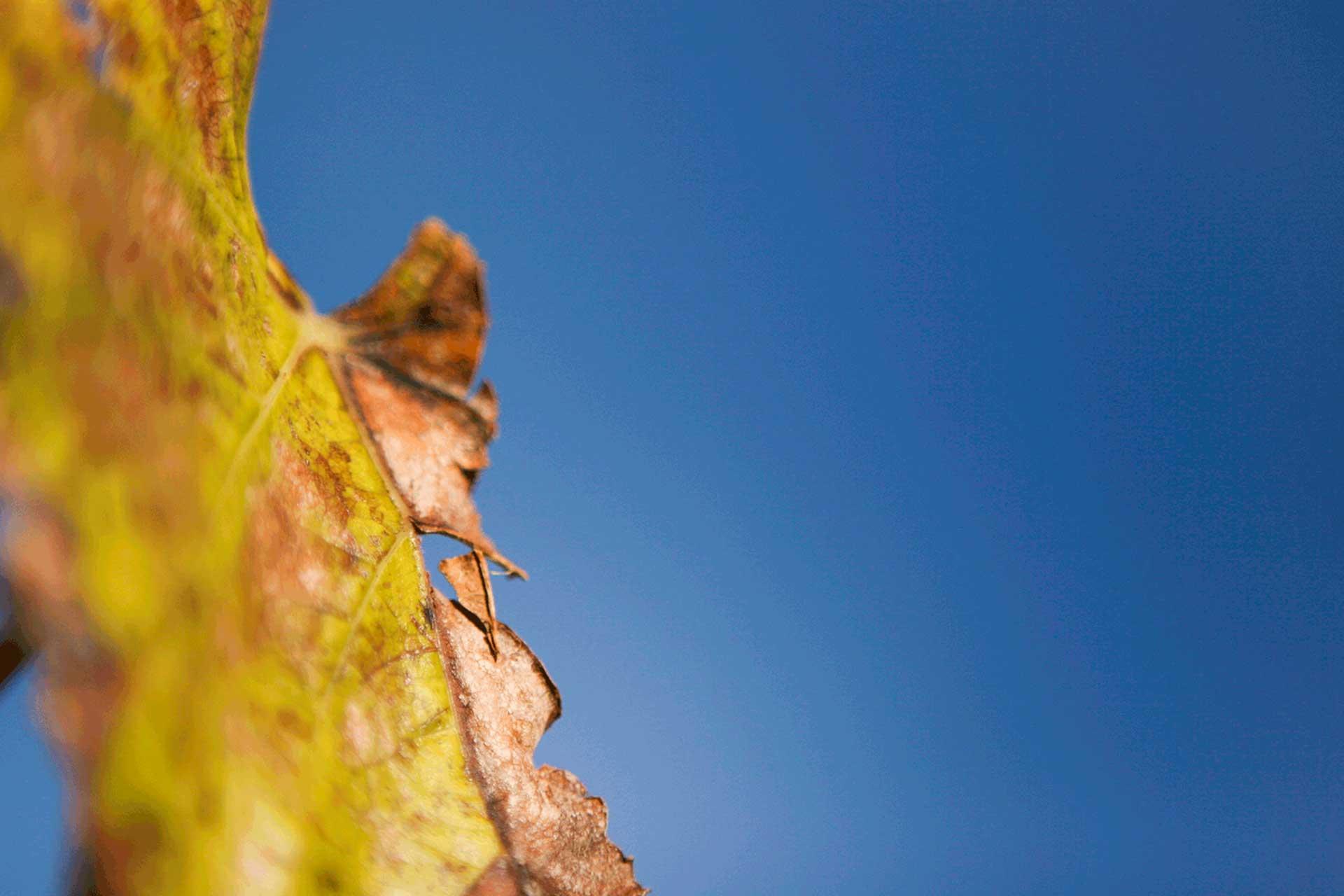 autunno-foglia-particolare>