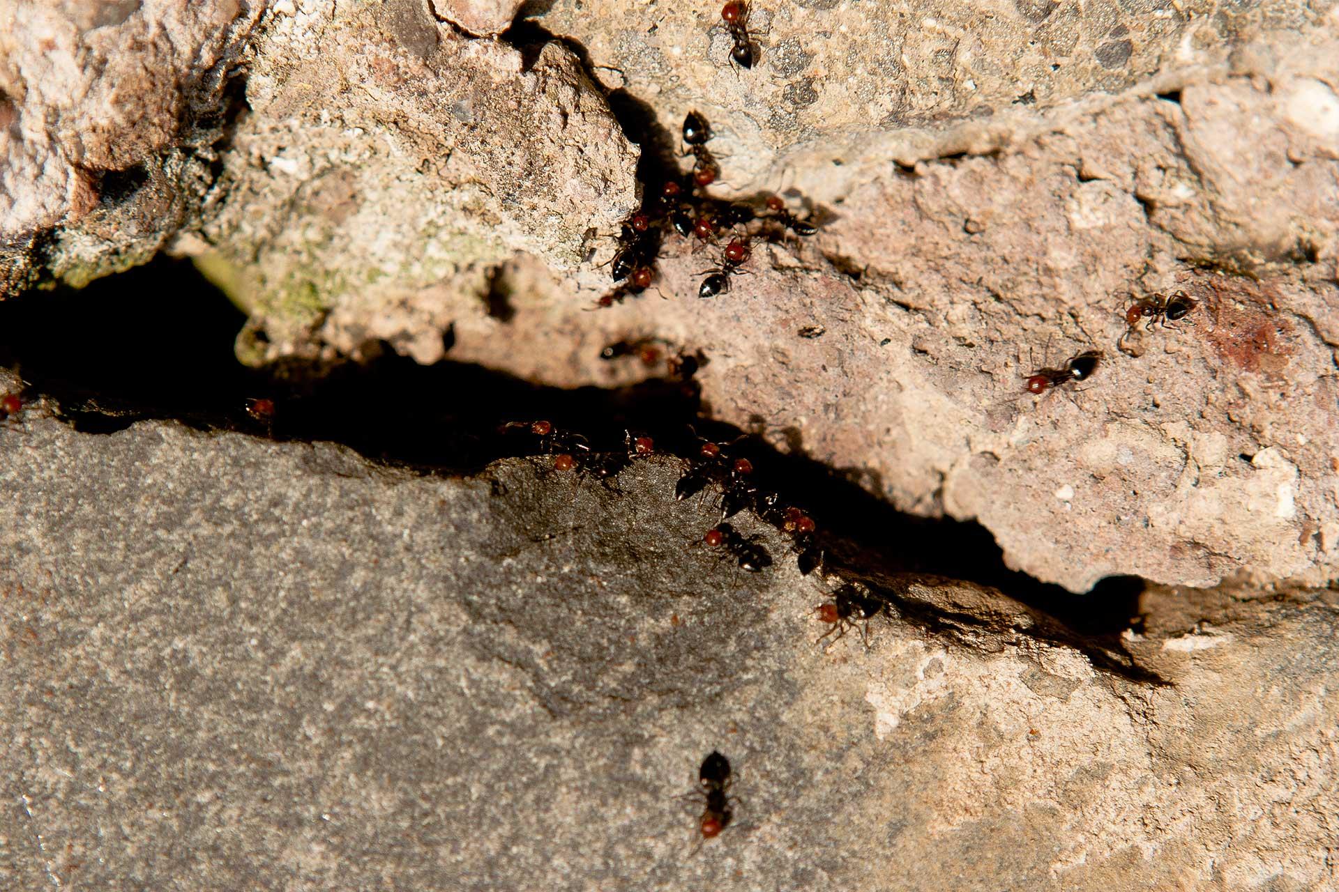 estate-formiche>