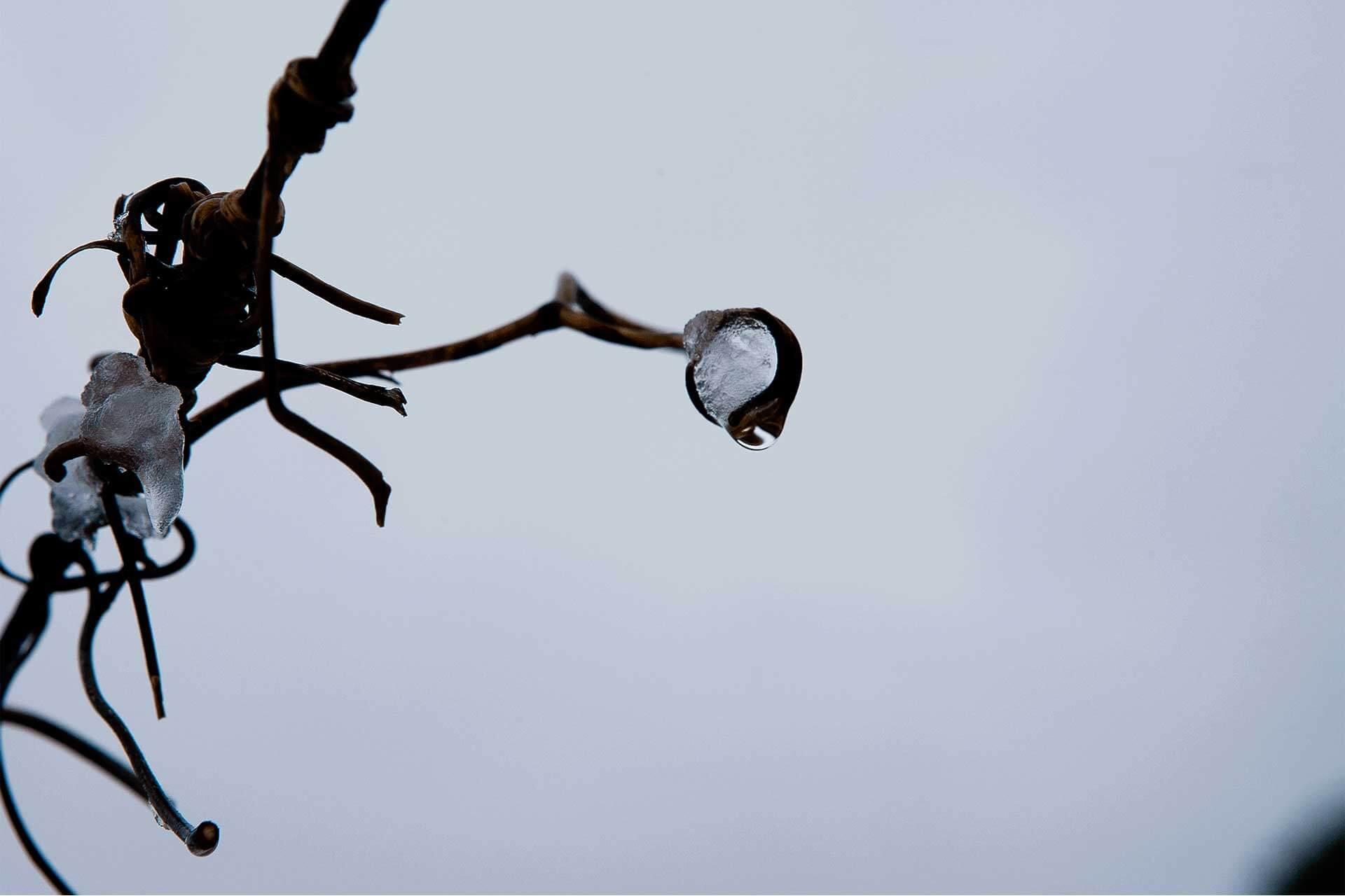 inverno-ramo-ghiacciato>