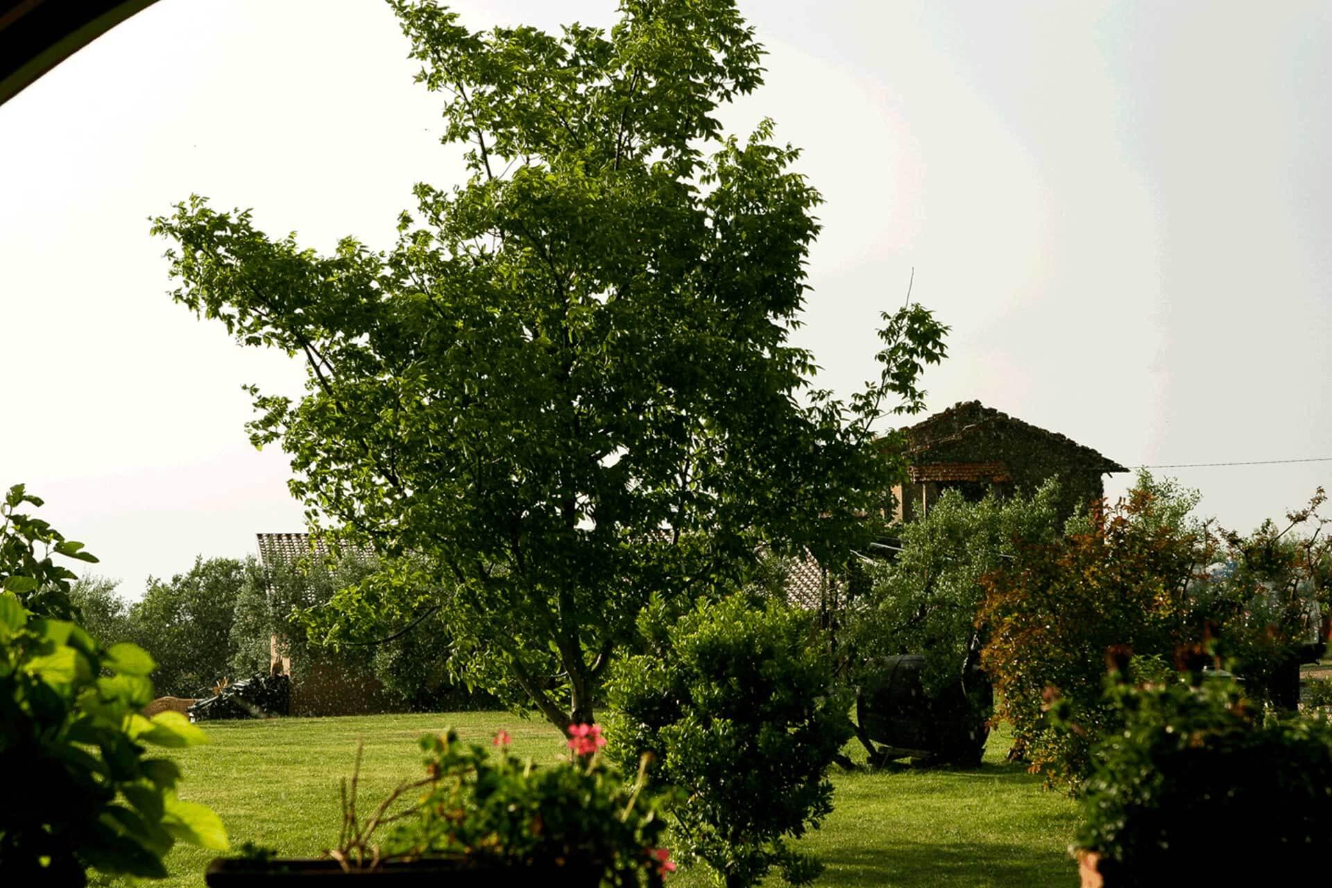 primavera-5-olivella>