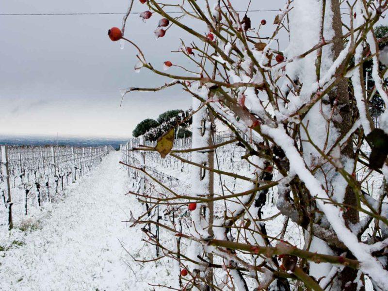 inverno olivella